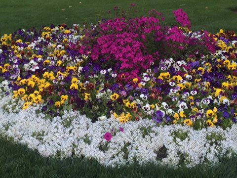 A flower garden is how I can be happier over time.